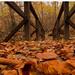 Levelek hídja