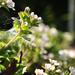 Album - Növények, munkák