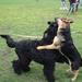 Album - Kozak kiképzés/dog training