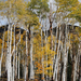 US 2010 Day27  017 Great Basin NP, NV