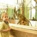 Állatkertben, 2010 május