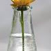 Virág üvegben 4