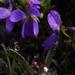 Sokcsepp tavasz