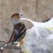 kis etető, nagy madár