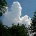 felhőtánc a fák között