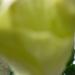 növények 021