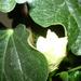 növények 031