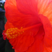 növények 034