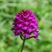 DSC 5905 A virág mely élőben kék volt