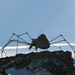 Indokolatlan pók a hegy tetején
