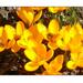 Virágok és méhek