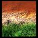 vörös-fehér-zöld (halott Marcal)
