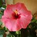 Album - -rózsaszín-pink-cikl-lilás