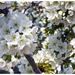 Hatalmas virágfüggöny
