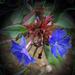 különleges növények, két-és-fél kék