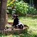 állatok, napozó kutyus