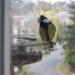 madarak, na nézzük a menűt